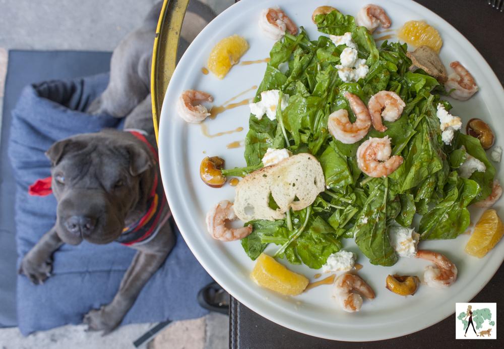 salada de rúcula e camarão e cachorro deitado olhando o prato