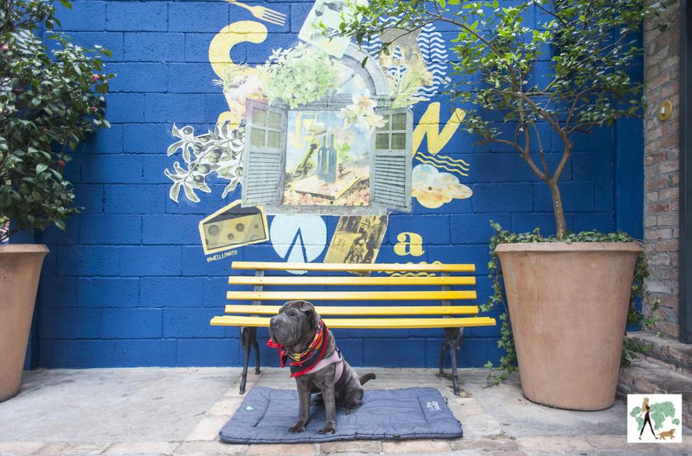cachorro sentado em cima de almofadas com parede grafitada ao fundo e banco de praça