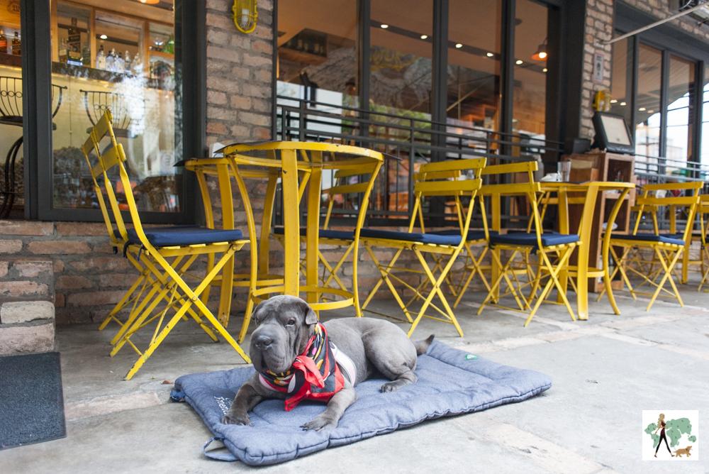 cachorro em cima de almofada na frente de mesas em varanda de restaurante