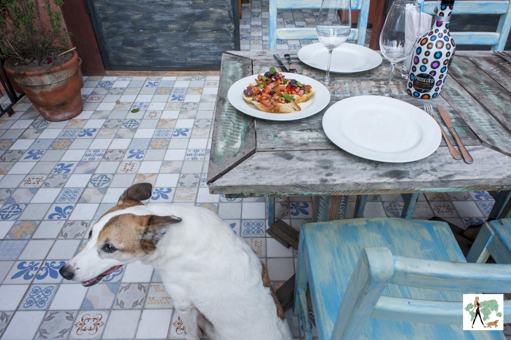 cachorro ao lado da mesa de restaurante