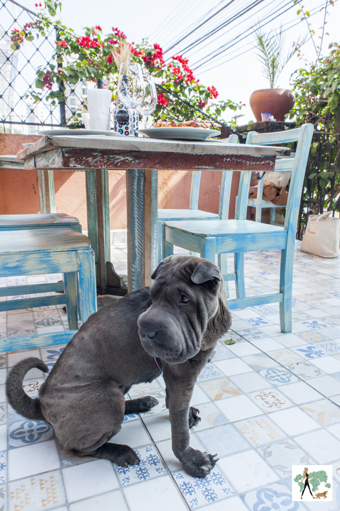 cachorro ao lado de mesa em restaurante