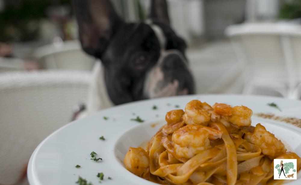 prato de massa e cachorro ao fundo