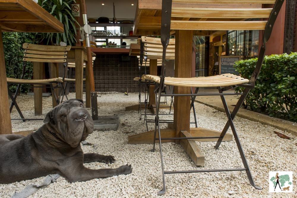 cachorro em restaurante