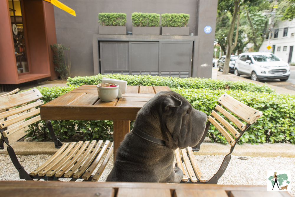 cachorro entre mesas
