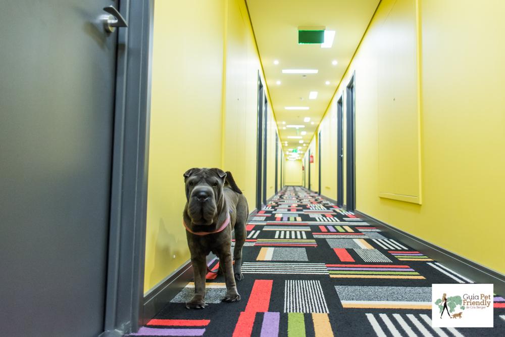 Cachorro em pé no corredor de hotel