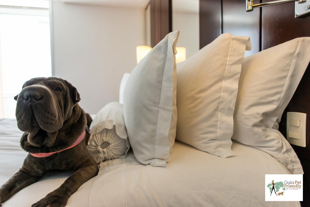 cachorro deitado na cama com vários travesseiros