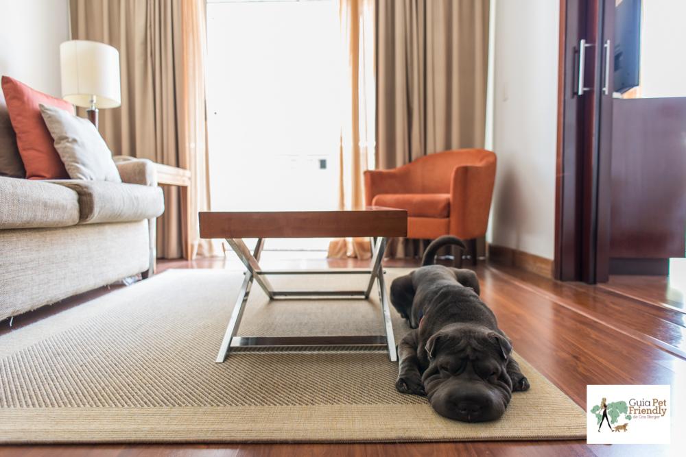 cachorro deitado em cima de tapete em sala de hotel