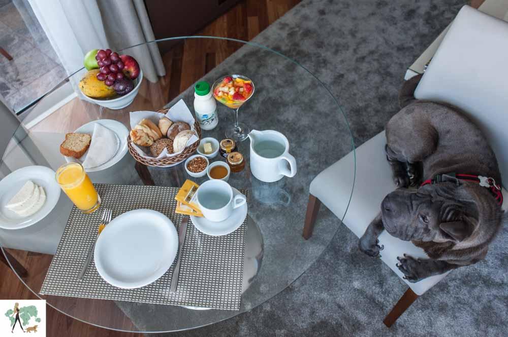cachorro sentado em cima de cadeira e café da manhã servido na mesa de hotel