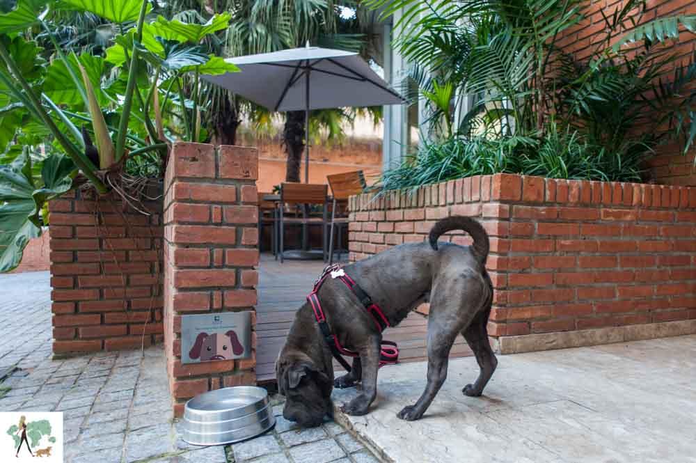 cachorro na frente de comedouro em área externa de hotel
