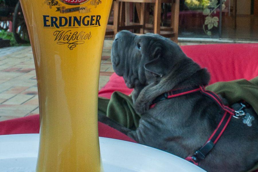 copo de cerveja e cachorro ao fundo