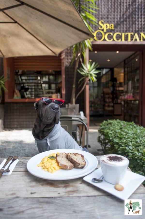Cachorro sentado à mesa com xícara de capuccino e ovos mexidos