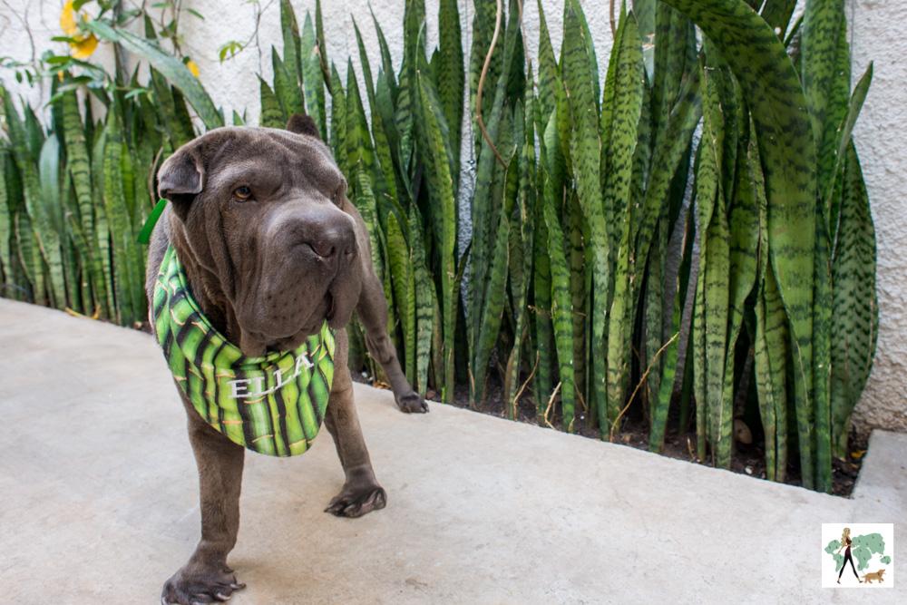 cachorro perto das plantas