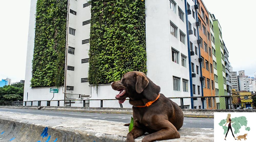 cachorro ao lado de prédio com jardim vertical