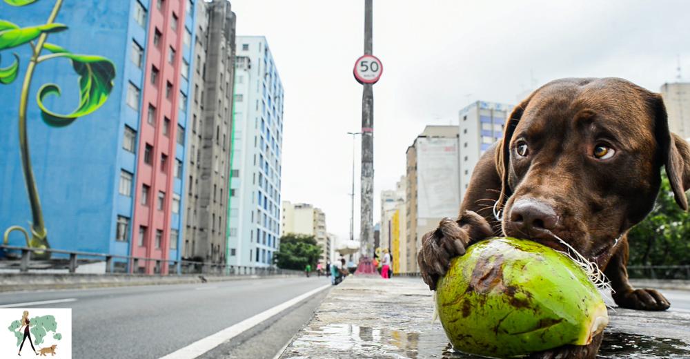 cachorro ao lado de coco verde no minhocão