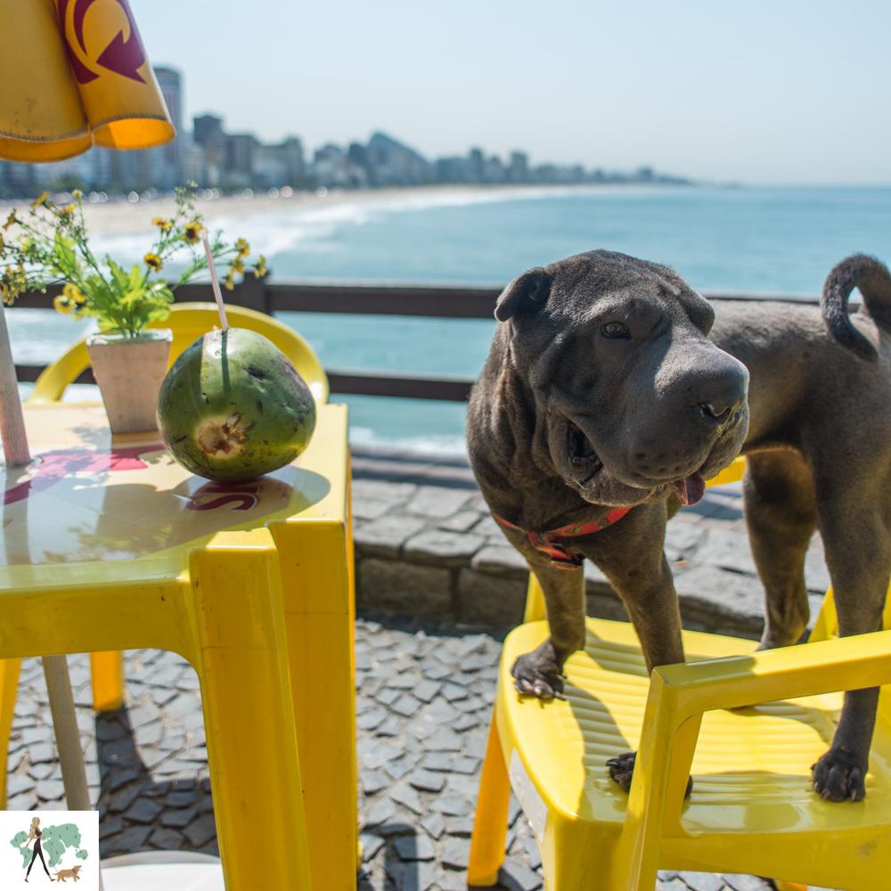 cachorro em cima da cadeira com coco em cima da mesa e o mar ao fundo