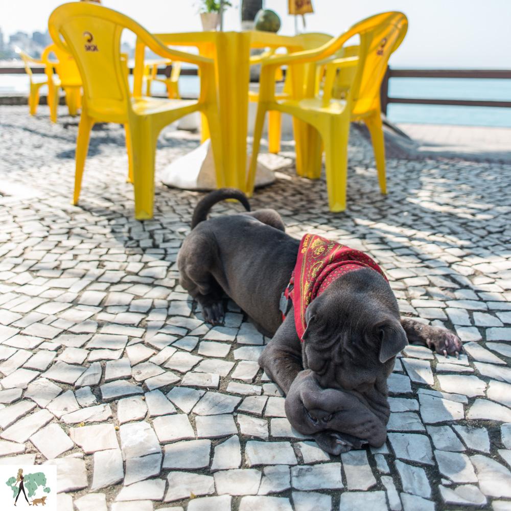 cachorro sentado em bar no Rio de Janeiro