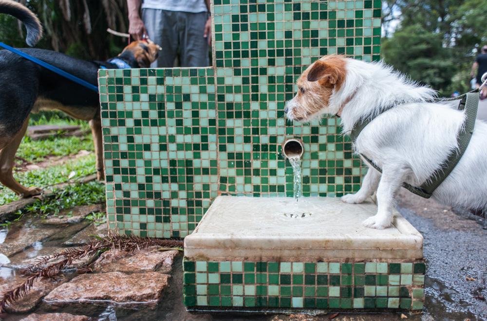 cachorro ao lado de bebedouro no parque