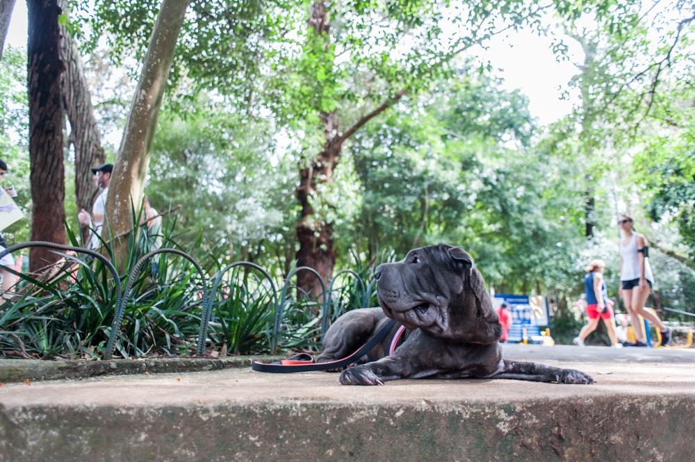 cachorro deitado na calçada de parque