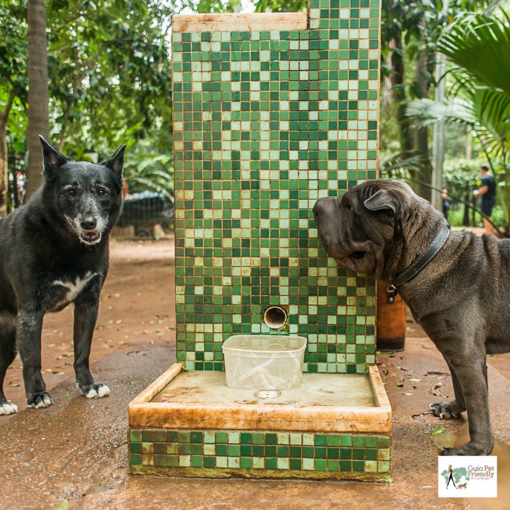 cachorros ao lado de bebedouro em parque