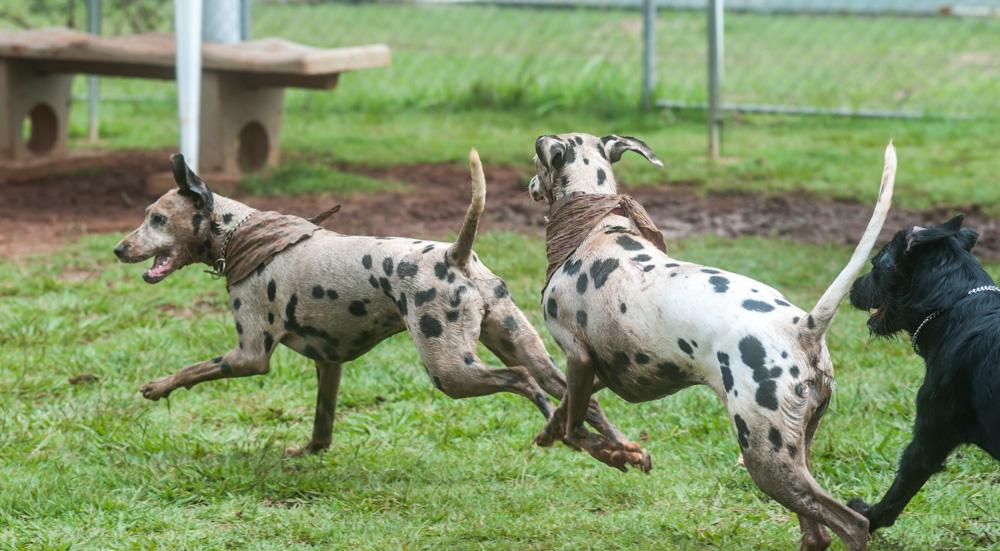 cachorros correndo sem guia no parque