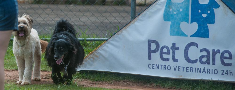 cachorros ao lado de pet care no parque
