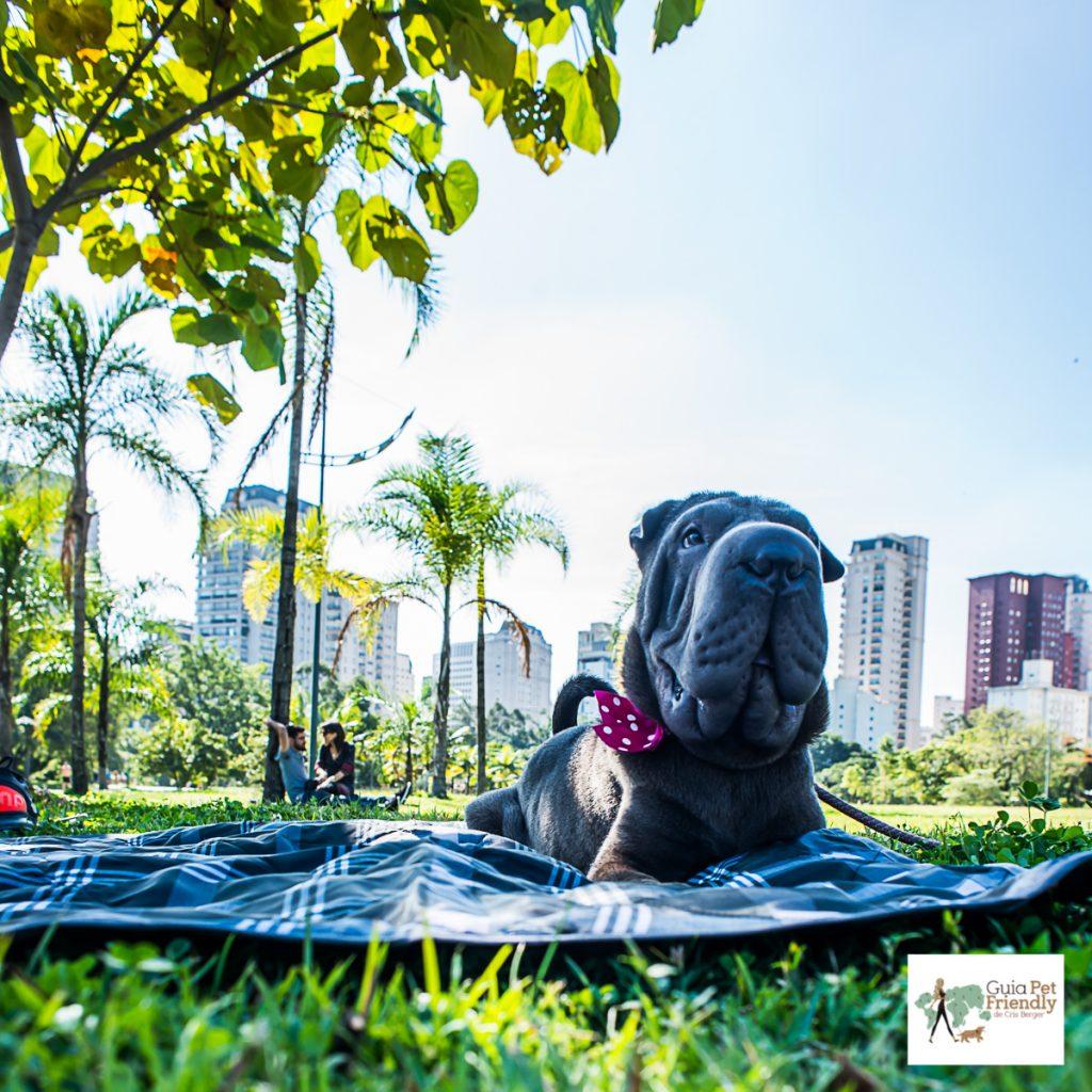 cachorro deitado na almofada em grama de parque