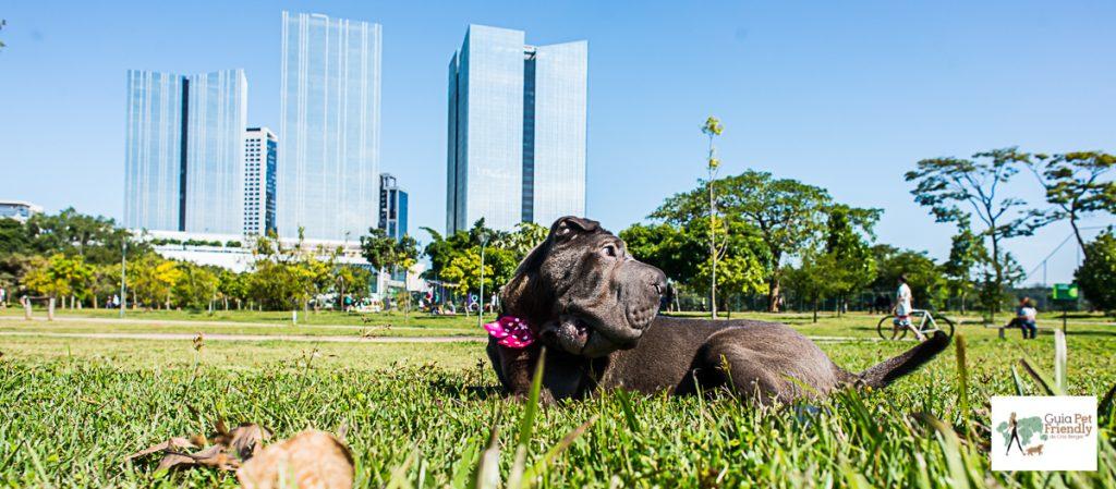 cachorro deitado na grama com prédios ao fundo