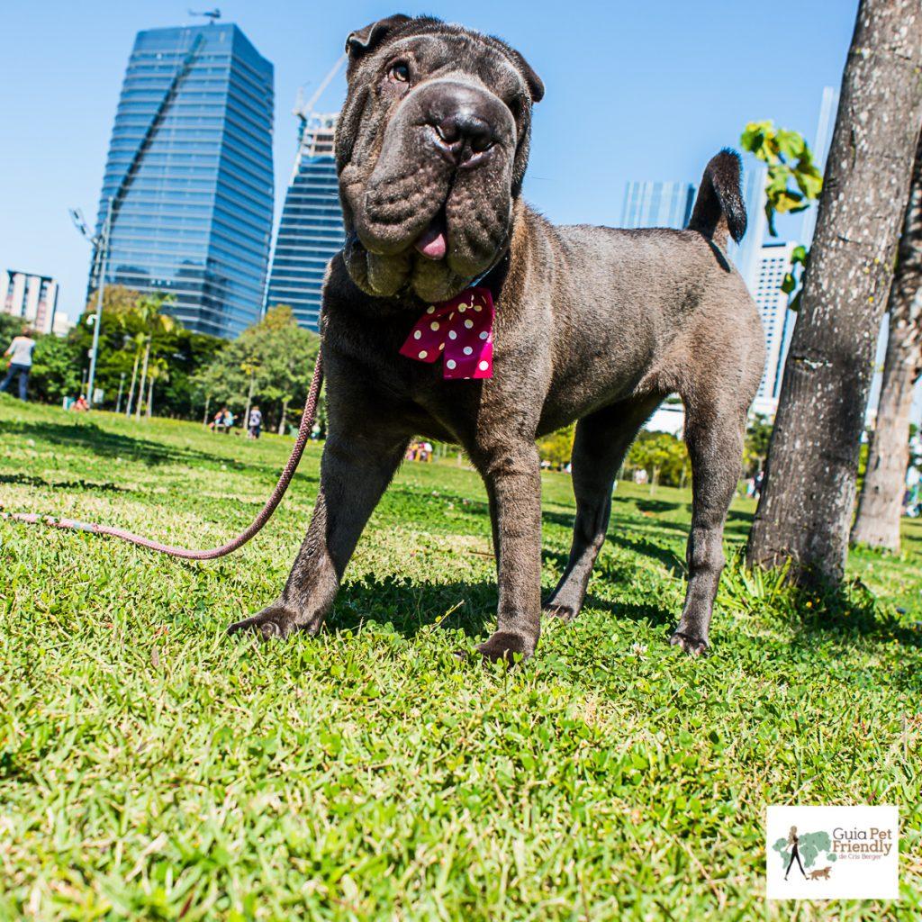 cachorro em pé na grama do parque