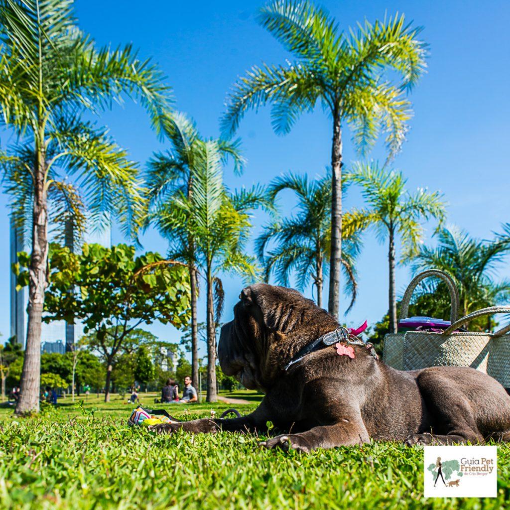 cachorro deitado na grama do parque
