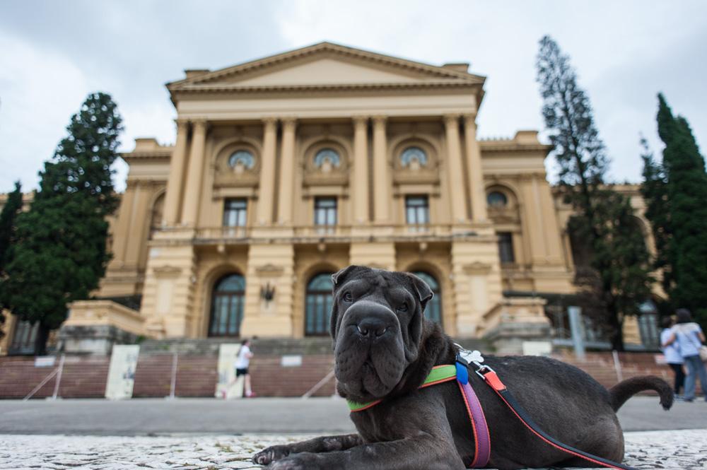 cachorro deitado em frente ao museu