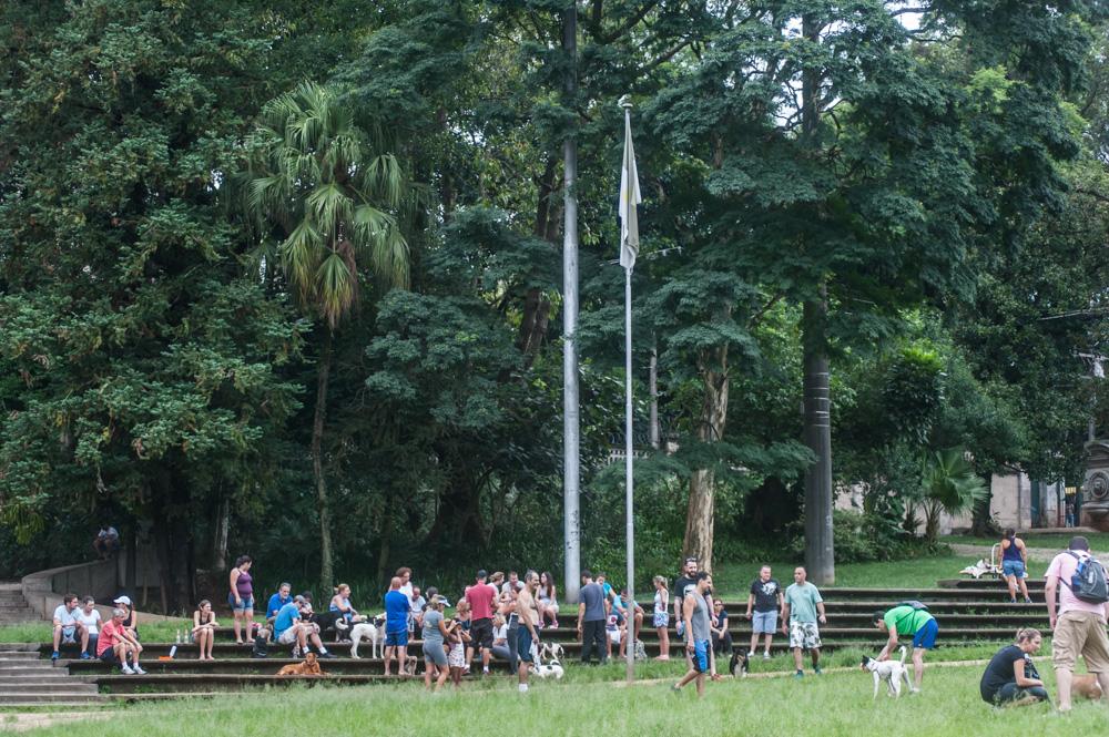 pessoas com seus cachorros no parque