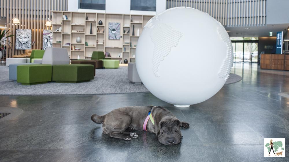 cachorro deitado no lobby de hotel com globo terrestre gigante ao fundo