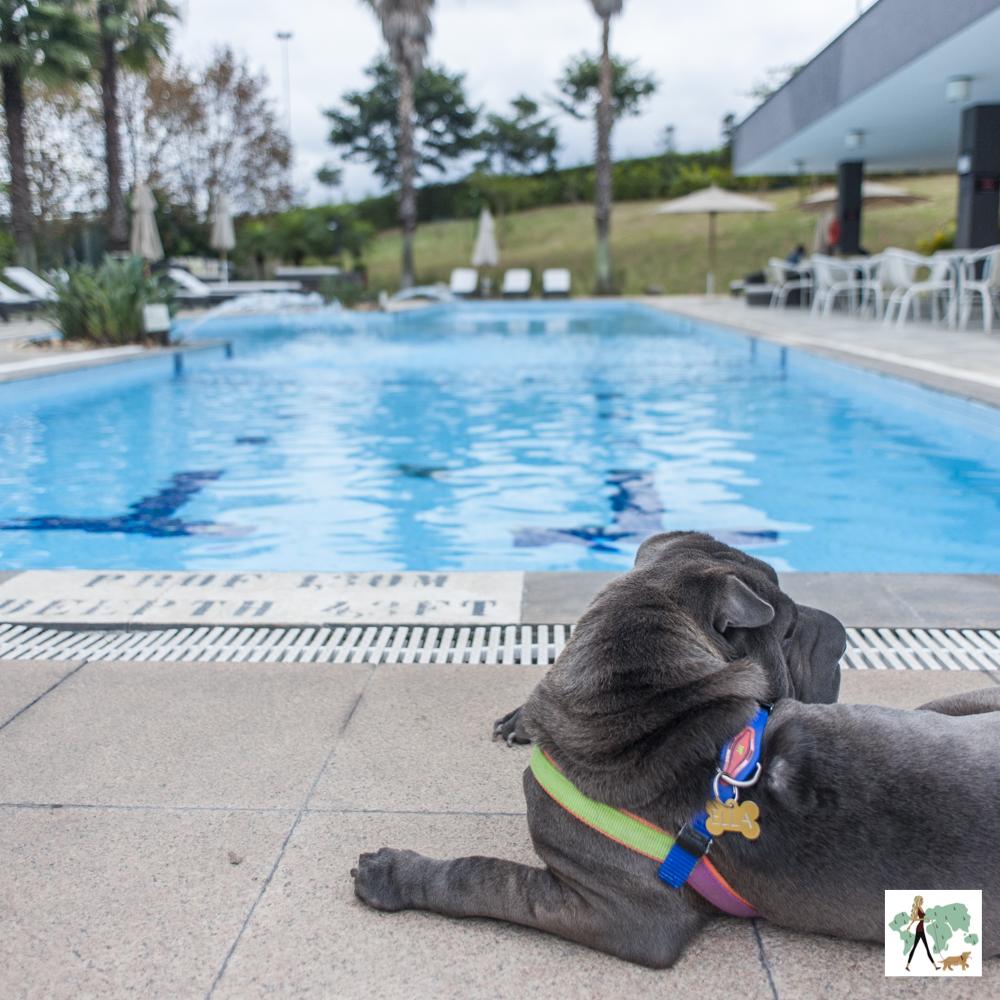 cachorro deitado ao lado de piscina