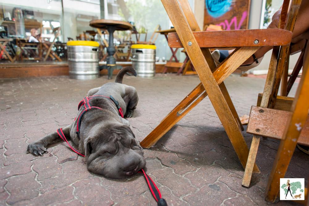 cachorro sentado na calçada do Sabugosa
