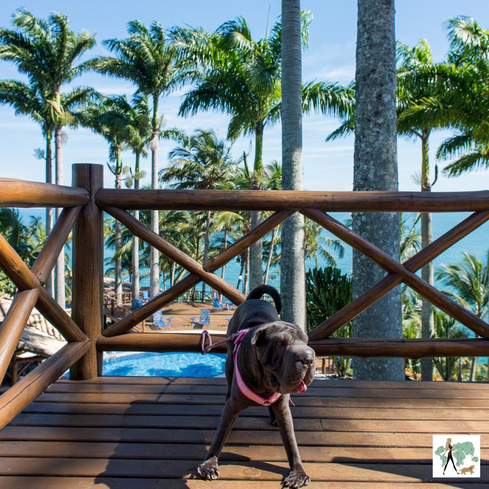 Cachorro em deck de madeira com coqueiros ao fundo