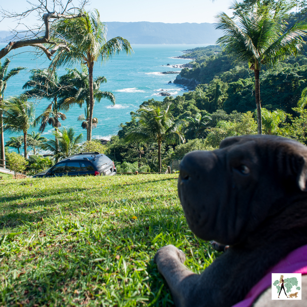 silhueta de cachorro e vista para costa ao fundo