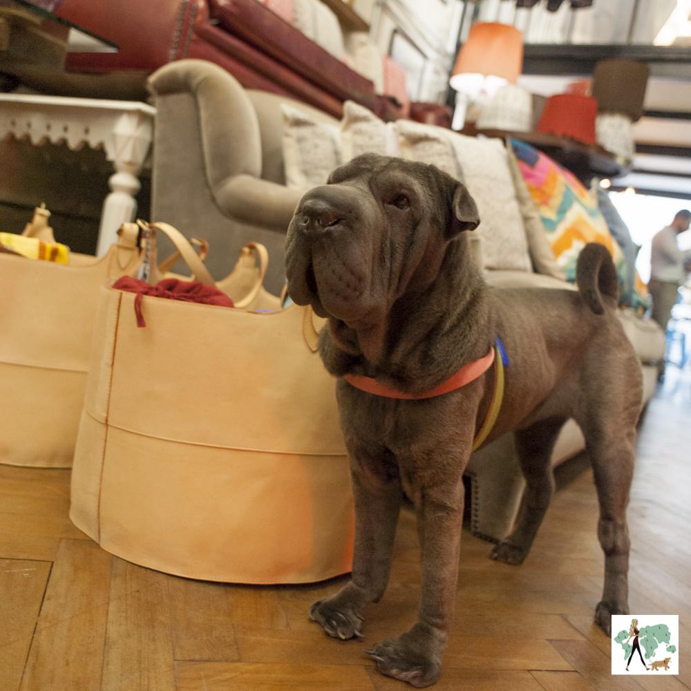 cachorro em pé em loja de decoração