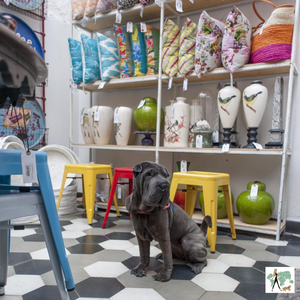 cachorro sentado em loja de decoração com almofadas e vasos em prateleira