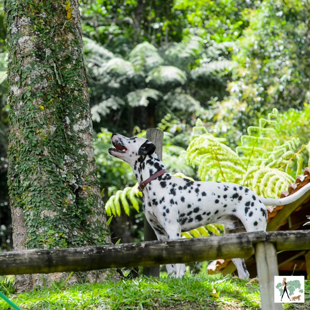 cachorro dálmata ao lado da árvore