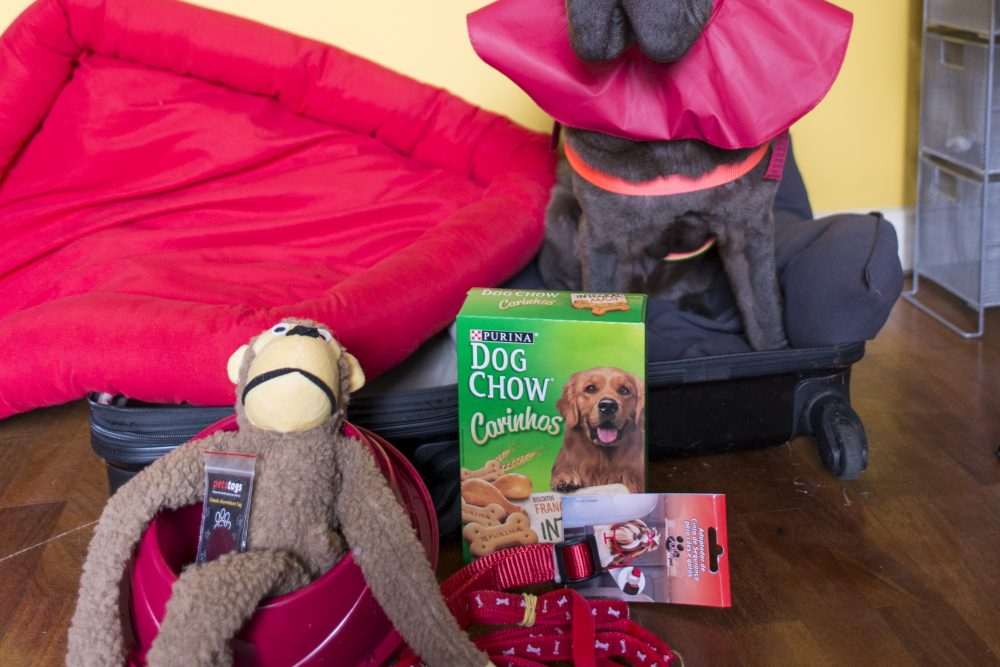 cachorro sentado dentro da mala