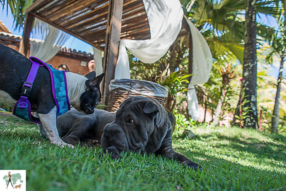 cachorros brincando no gramado