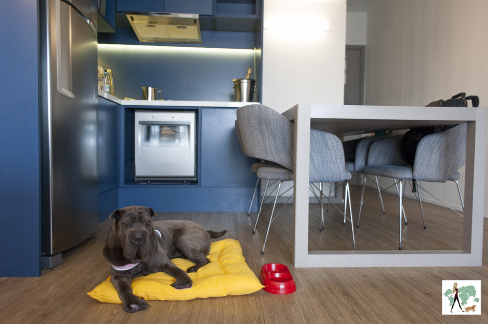 cachorro em cima de almofada ao lado de cozinha no estilo americano