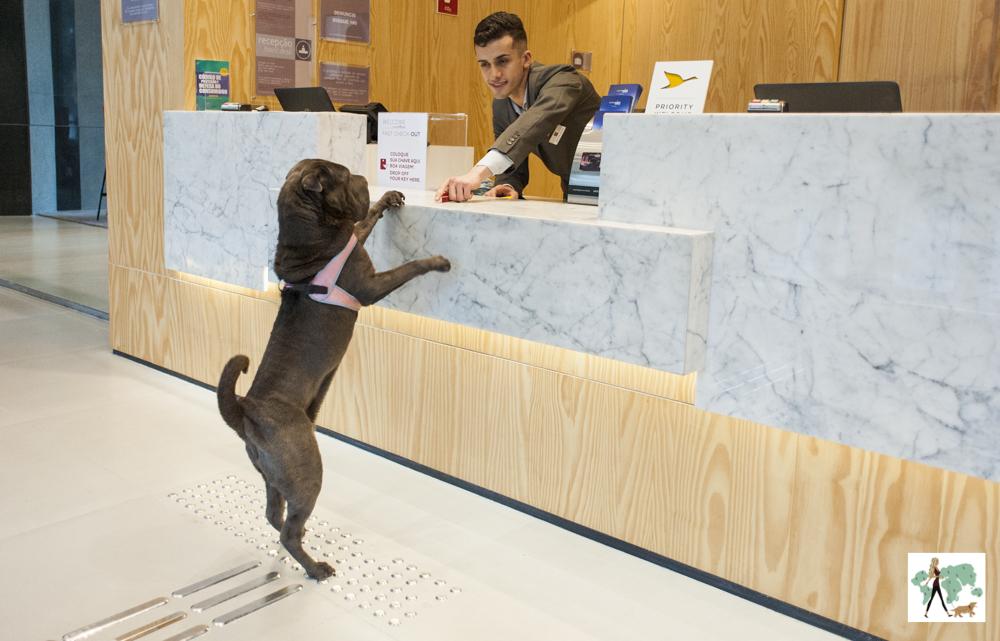 cachorro de pé encostado no balcão de hotel com atendente estendendo a mão