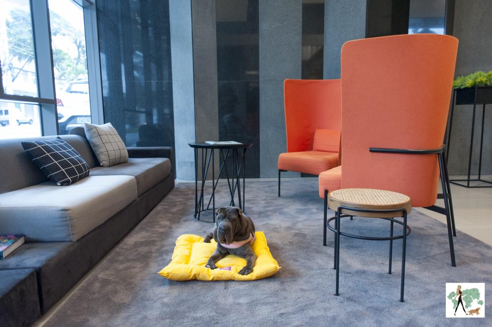 cachorro em cima de almofada em sala de hotel