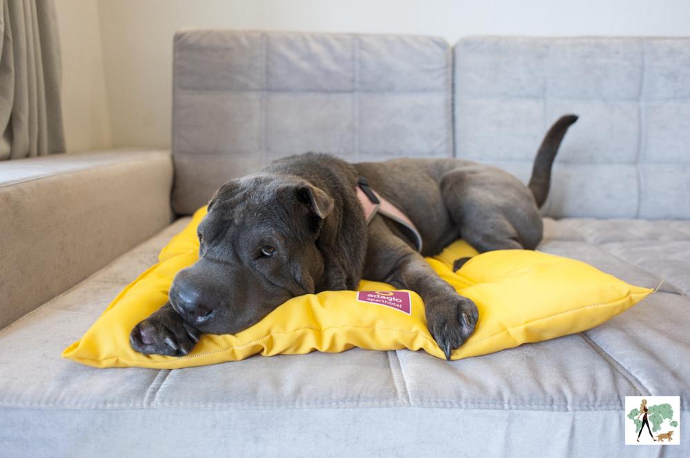 cachorro em cima de almofada em sofá