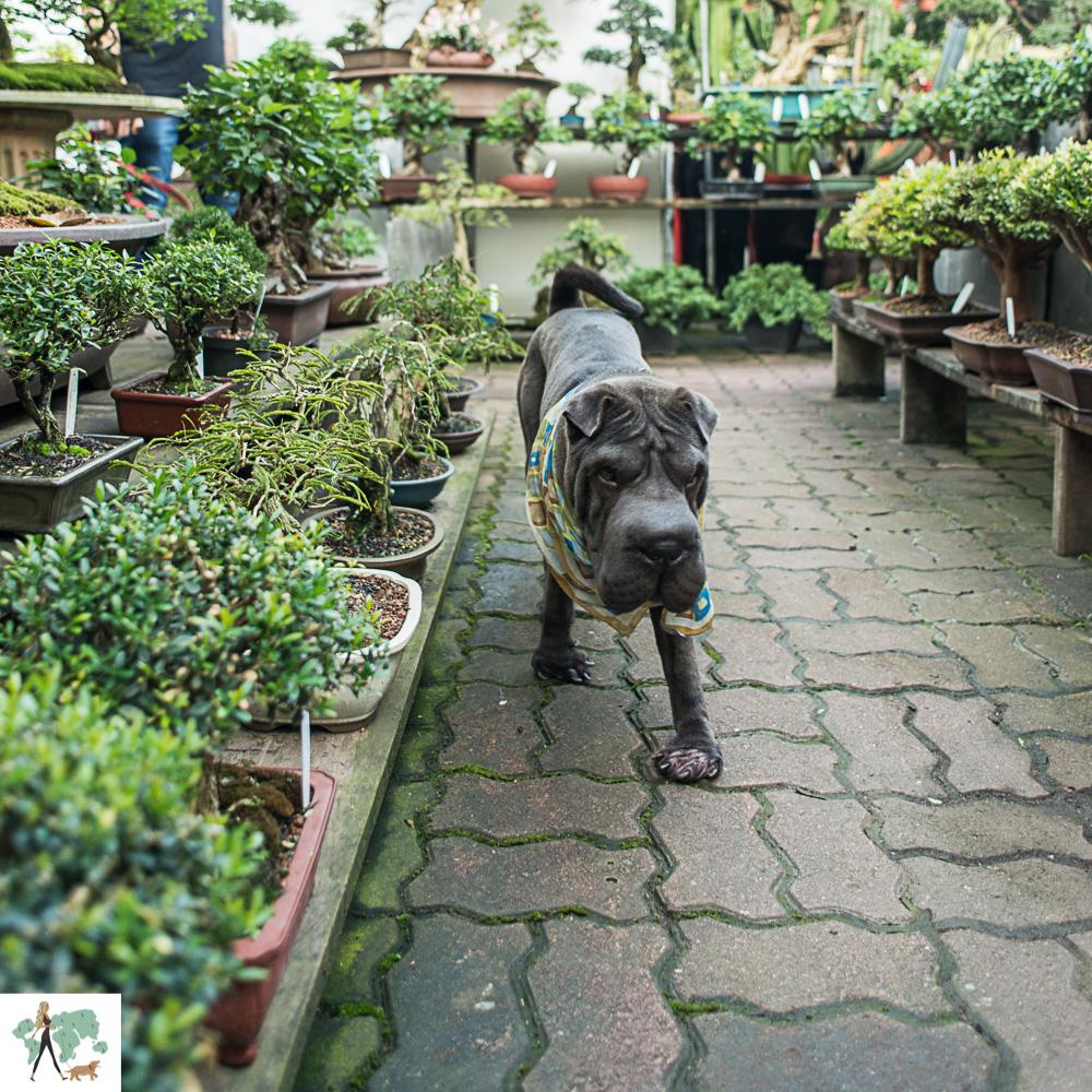 cachorro caminhando ao lado de jardim de bonsais