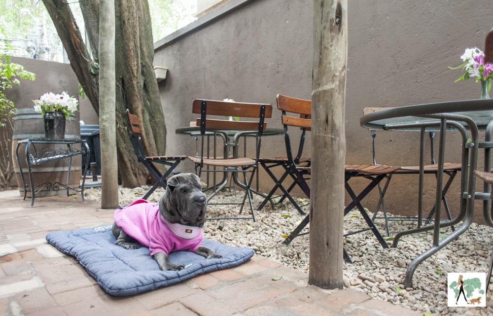 cachorro deitado no chão ao lado de mesas e cadeiras