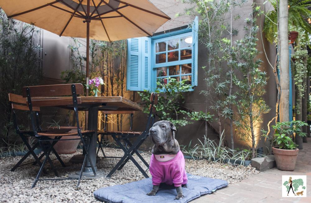 cachorro sentado de frente para mesas e cadeiras