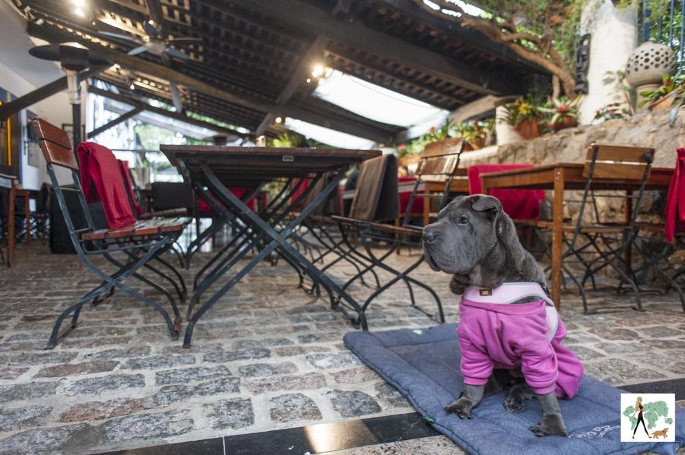 cachorro ao lado de mesas em restaurantes