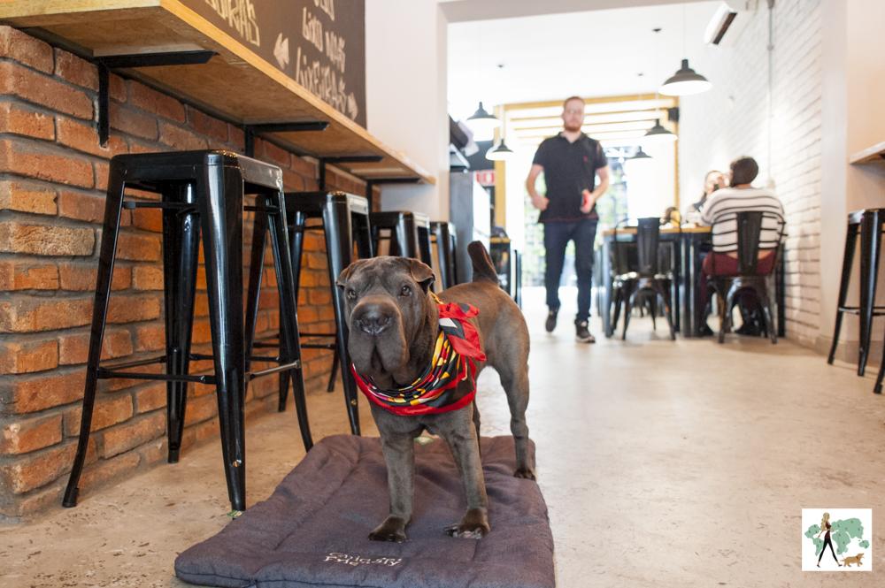 cachorro no colchonete na área para os pets em hambúrgueria